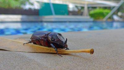 pool - bugs